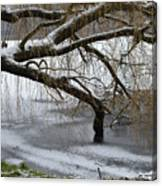 Willow Tree On The Frozen Lake Detail Canvas Print
