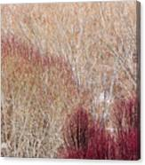 Willows In Winter Canvas Print