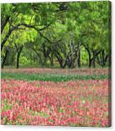 Willows,indian Paintbrush Make For A Colorful Palette. Canvas Print