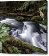 Wilson Creek #18 With Added Cedar Waxwing Canvas Print