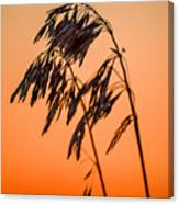 Wilting Sunset Canvas Print