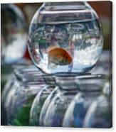Win A Goldfish Canvas Print