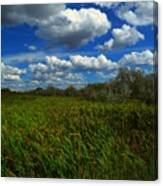Wind In The Cattails Canvas Print