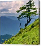 Wind Sculpted Conifer Canvas Print
