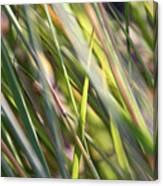 Wind Tossed - Canvas Print