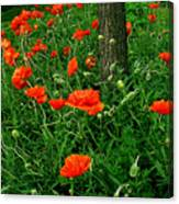 Windblown Poppies Canvas Print