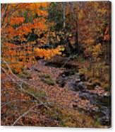 Winding Brook Canvas Print