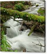 Winding Creek With A Mossy Log Canvas Print