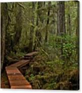 Winding Through The Willowbrae Rainforest Canvas Print
