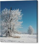 Windmill In The Frost Canvas Print