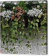 Window Box Flowers Canvas Print