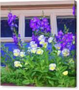 Window Box With Pansies Canvas Print