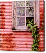 Window Of Ivy Canvas Print