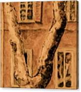 Windows In Rome Canvas Print