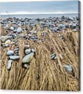 Windswept Grass At Lawrencetown Beach, Nova Scotia Canvas Print