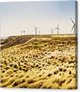 Windswept Tasmania Canvas Print