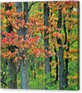 Windy Day Autumn Colors Canvas Print