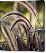 Windy Grass Canvas Print
