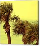 Windy Palms Canvas Print