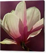 Wine And Cream Magnolia Blossom Canvas Print