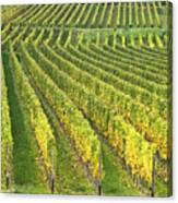 Wine Growing Canvas Print