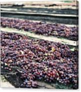 Wine-ready Canvas Print