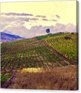 Wine Vineyard In Sicily Canvas Print