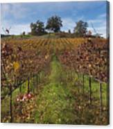 Wineland Canvas Print