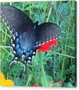 Wing Spread Butterfly Canvas Print