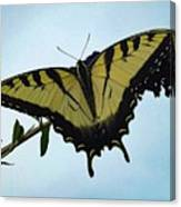 Wings Are Perfect Match - Eastern Tiger Swallowtail Canvas Print
