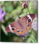 Wings Of Wonder - Common Buckeye Butterfly Canvas Print