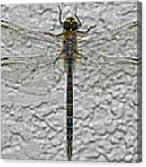 Wings On Stucco Canvas Print