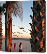 Wings Over The Palms Canvas Print