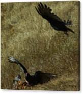 Wings Spread Wide Canvas Print