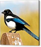 Winking Magpie Canvas Print