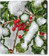 Winter - Ice Coated Holly Canvas Print