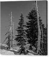 Winter Alpine Trees, Mount Rainier National Park, Washington, 2016 Canvas Print