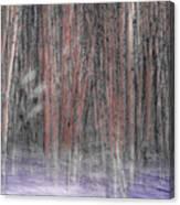 Winter Aspen Canvas Print