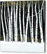 Winter Aspens II Canvas Print