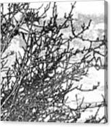 Winter Beckons Canvas Print