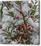 Winter Berries In Watercolor Canvas Print