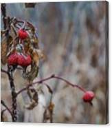 Winter Berries No.2 Canvas Print