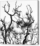Winter... Black And White Canvas Print