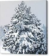 Winter Blanket Canvas Print