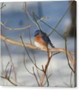 Winter Bluebird Art Canvas Print