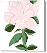 Winter Blush Rose Canvas Print