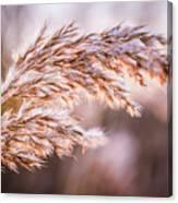 Winter Breeze Canvas Print