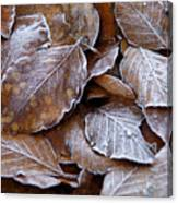 Winter Brown Leaves Powdered With Frost Canvas Print