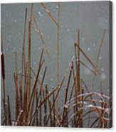 Winter Cat Tail Canvas Print