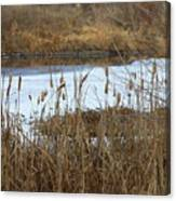 Winter Cattails  Canvas Print